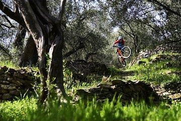 Table Top zwischen den ligurischen Olivenbäumen